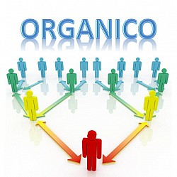 Adeguamento organici di diritto alle situazioni di fatto Personale ...